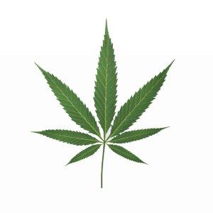 3D cannabis leaf