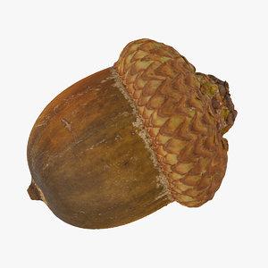 3D model acorn 02 raw scan