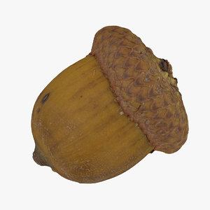 acorn 03 raw scan 3D model