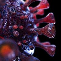 Coronavirus SARS-CoV-2 - Violet - SCENE