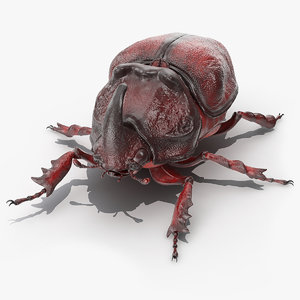 oryctes nasicornis rhinoceros beetle 3D model