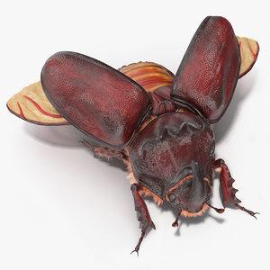 oryctes nasicornis rhinoceros beetle 3D