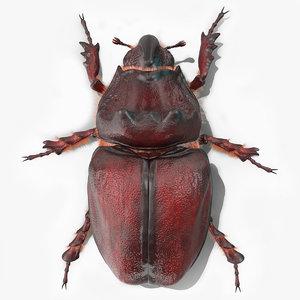 rhinoceros beetle oryctes nasicornis 3D