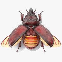 Oryctes Nasicornis Rhinoceros Beetle