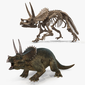 triceratops skeleton fossil rigged 3D