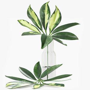 3D schefflera leaves model