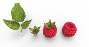 berry raspberry 3D model