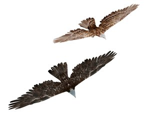 eagle hawk flying model