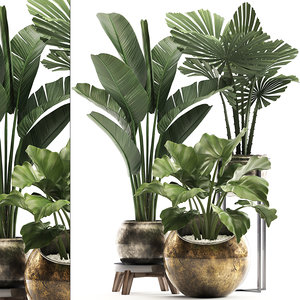 houseplants plants potted 3D model