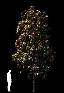 3D 4 x magnolia