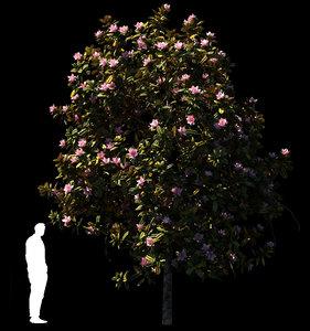 magnolia tree trunk 3D