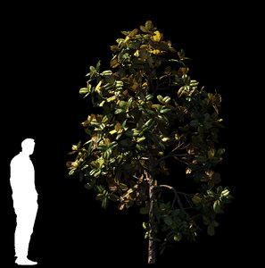 magnolia tree trunk model