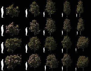 3D model magnolia tree trunk 20