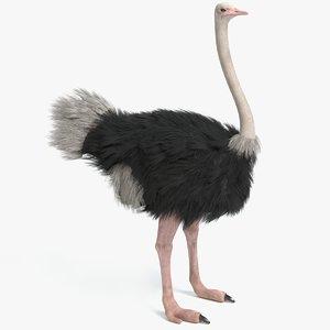 3D ostrich pbr