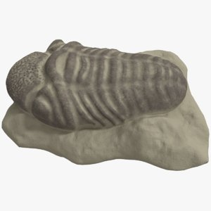 trilobite fossil animal 3D model