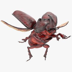 rhinoceros beetle oryctes nasicornis 3D model