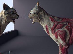 hungry cat 3D model