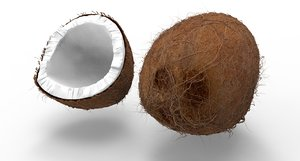 coconut nut coco model
