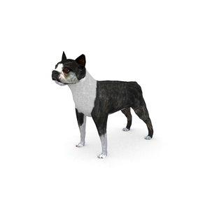 boston terrier 3D model