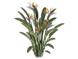 plant strelitzia reginae 3D model