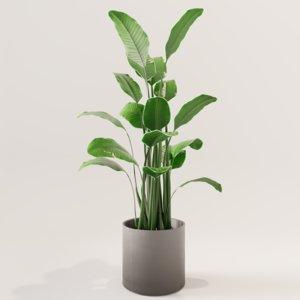 plant green 3D