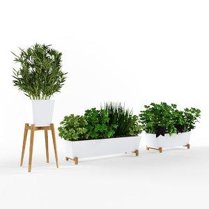 3D plant decoration nature model