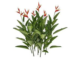 plant heliconia psittacorum 3D