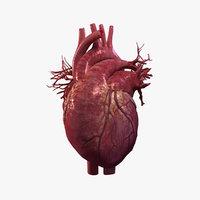 Animated Human Heart