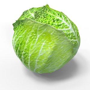 vegetable cabbage green model