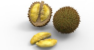 durian food fruit 3D