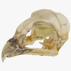 3D bird skull 01 raw