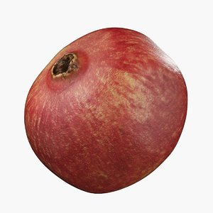 3D pomegranate details vrayforc4d