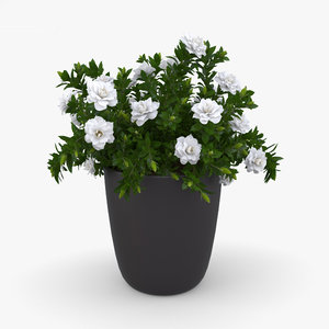 gardenia garden 3D model