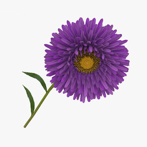 aster flowers plant 3D