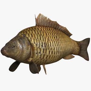 lwo fish crucian