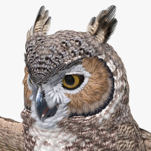 great horned owl rigged model