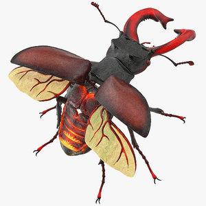 lucanus cervus stag beetle 3D