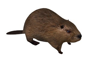 3D animals mammals beaver model