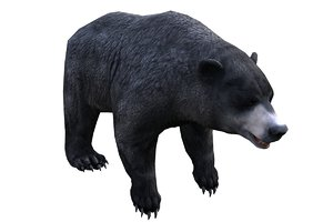 animals mammal bear 3D