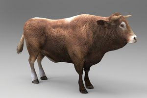3D bull animal cow