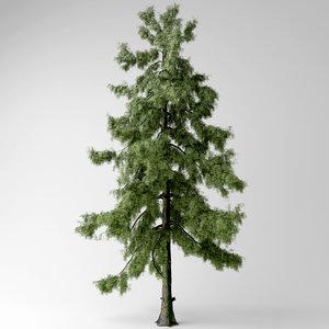 3D alaska cedar tree