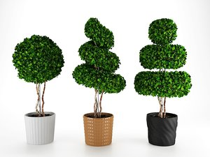 3D boxwood trees ceramic pots
