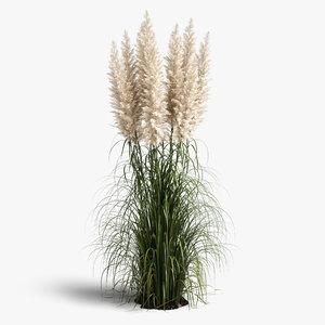 cortaderia plant model