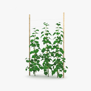 3D model cucumber plant