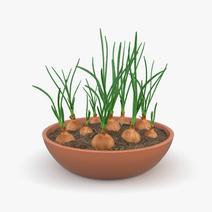 onion plant p 3D model