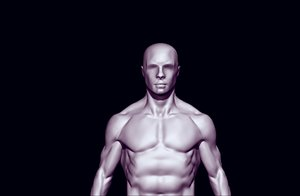 3D anatomy base mesh