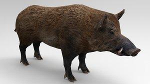 3D boar animals mammal model