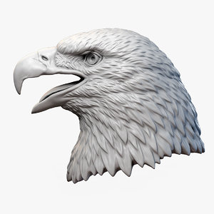 3D american bald eagle bird model