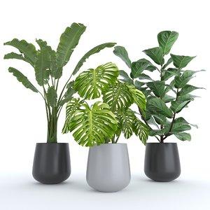3D set plants