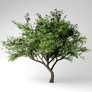 3D hook thorn plant model